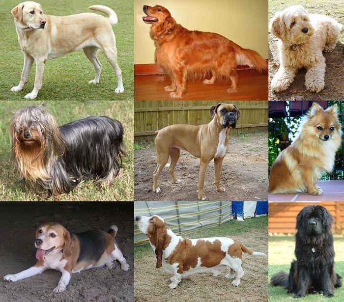 Clasificación de los caninos