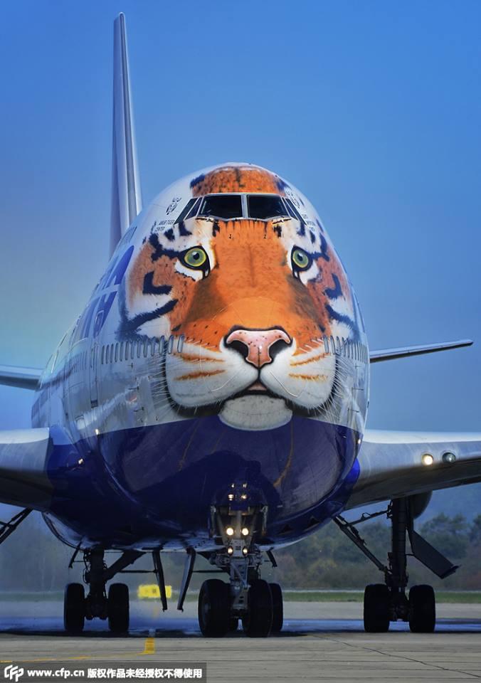 Boeing Tigre - Rusia (5)