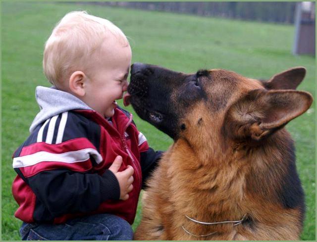 El Pastor Alemán es un protector maravilloso de los niños y de la propiedad de su dueño.