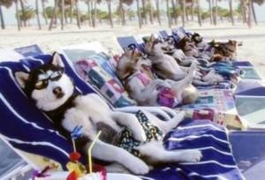hoteles-que-permiten-alojarnos-con-nuestras-mascotas-300x204