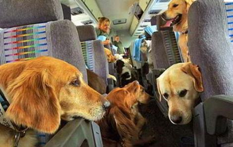 Perro viajando en avion