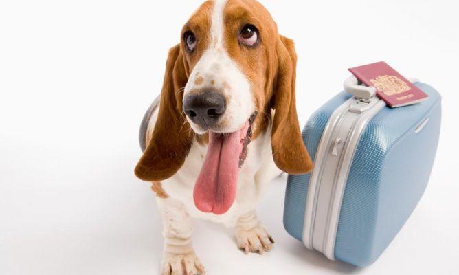 Perro Viajero